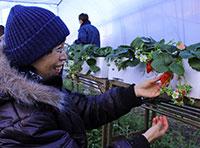第6回 シイタケの植菌&いちごを収穫