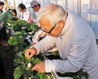 第3回 玉ねぎ栽培に挑戦