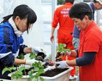 第2回 いちご栽培を学ぶ