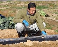 第7回 ジャガイモの超浅植えを実践