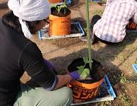第9回 メロンと夏野菜を栽培