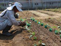 第3回:農薬・水管理について学ぶ