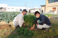 第6回:成長した野菜を収穫