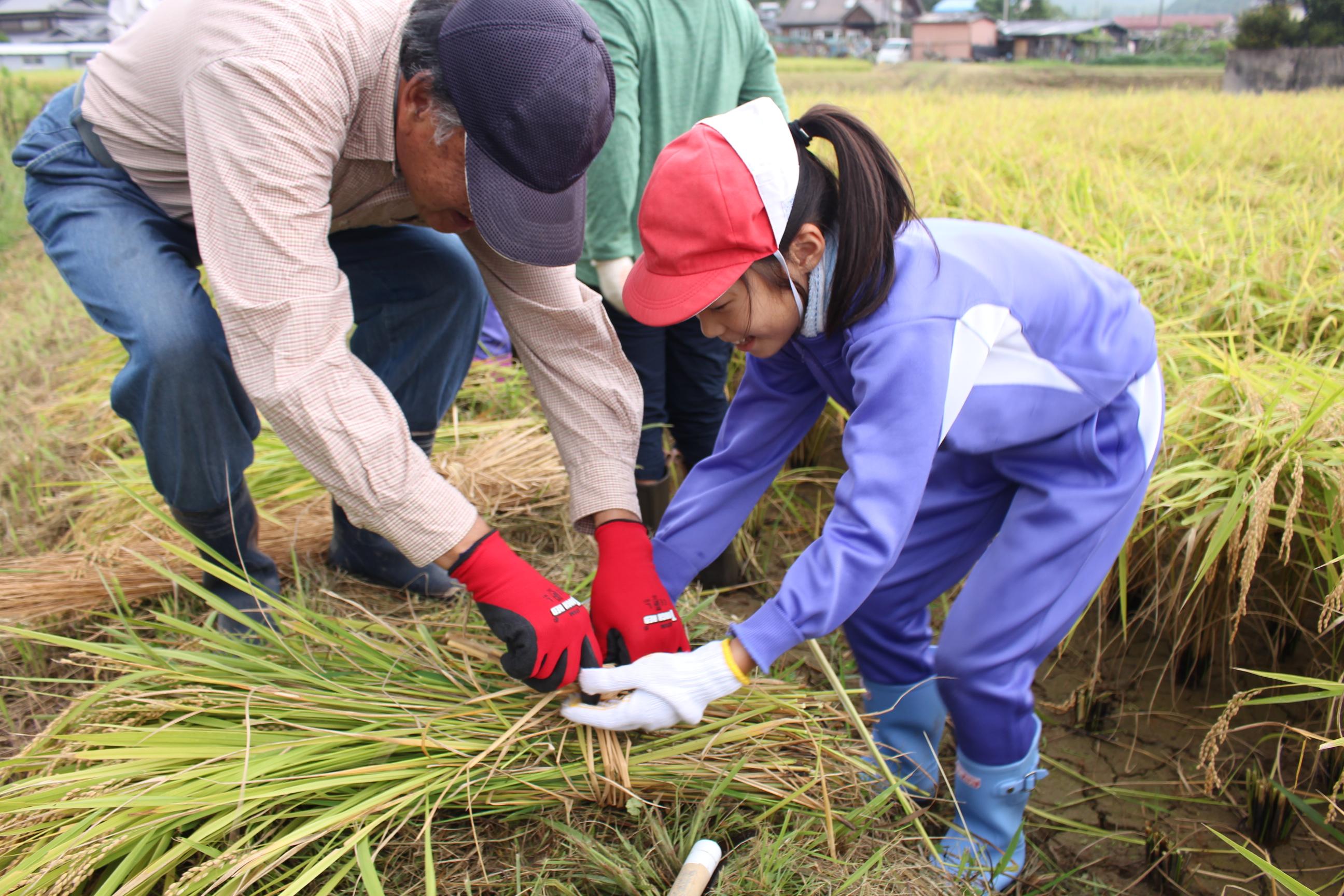 稲作体験学習