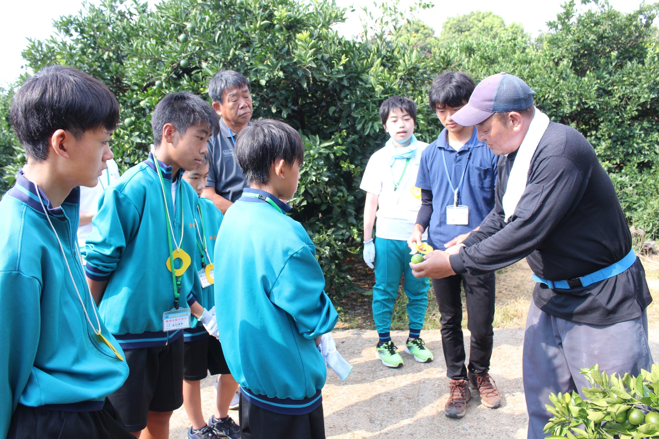 中学生のミカン摘果体験