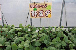 【JAグリーン津店】夏野菜の苗を入荷しました