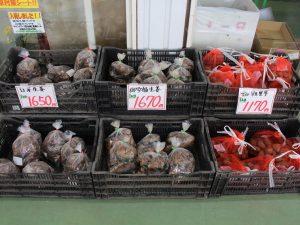 【JAグリーン津店】ショウガ種・里芋種入荷しました!