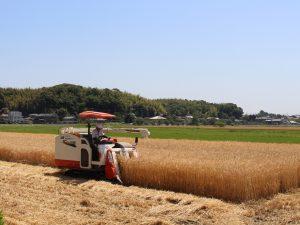 ㈱ジェイエイ津安芸 麦刈り