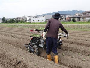 【㈱ジェイエイ津安芸】キャベツの定植作業開始!